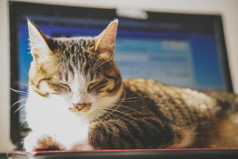 PC,猫,スリープ